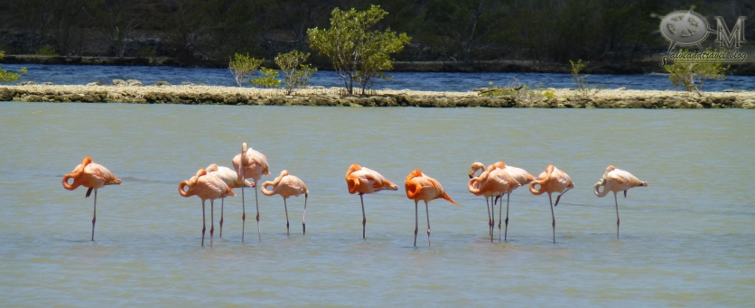 Saline mit Flamingos
