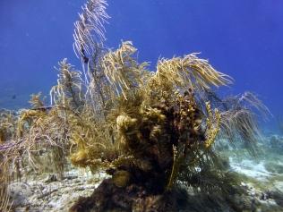 Curacao_022