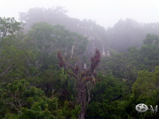 Guatemala 2017-Tikal 05