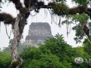 Guatemala 2017-Tikal 21